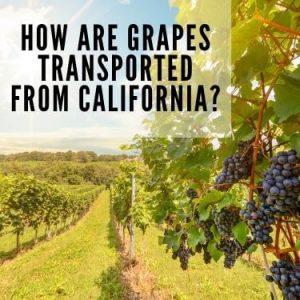 How are grapes transported from California