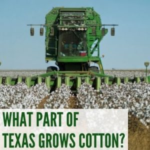 WHAT PART OF TEXAS GROWS COTTON