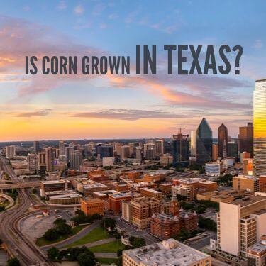 Is Corn Grown In Texas