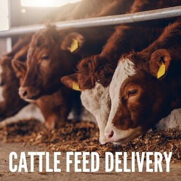 Cattle Feed Delivery