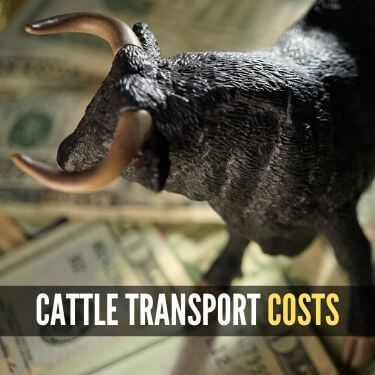 Cattle Transport Costs