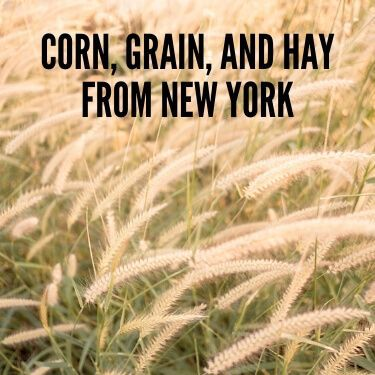 Corn, Grain, and Hay from New York