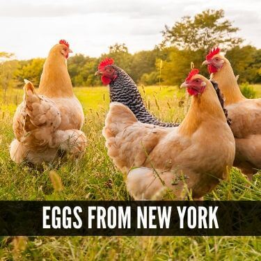 Eggs from New York