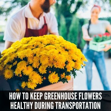 How to Keep Greenhouse Flowers Healthy During Transportation