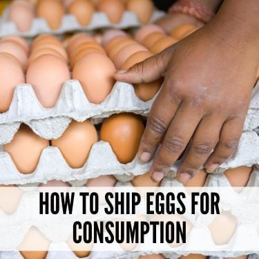 How to Ship Eggs for Consumption