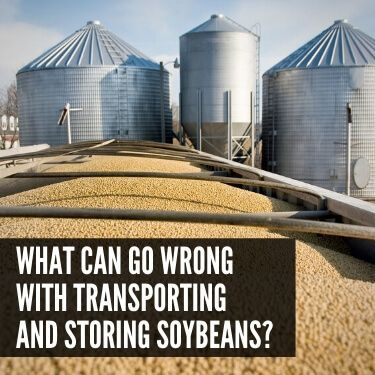 What Can Go Wrong with Transporting and Storing Soybeans