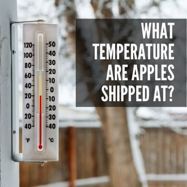 What Temperature are Apples Shipped at