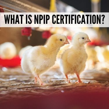 What is NPIP Certification