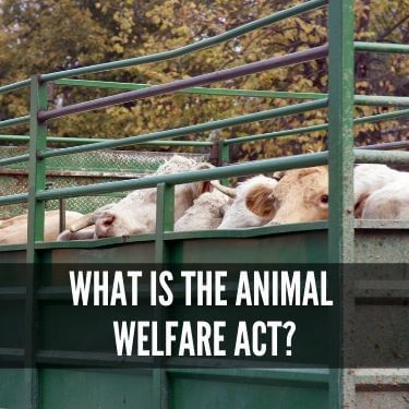 What is the Animal Welfare Act