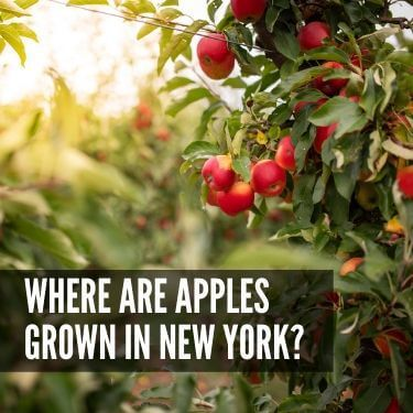 Where are Apples Grown in New York