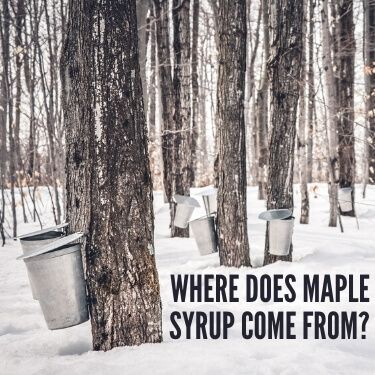 Where does Maple Syrup Come From