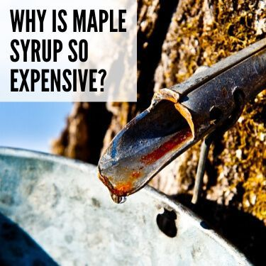 Why is Maple Syrup so Expensive