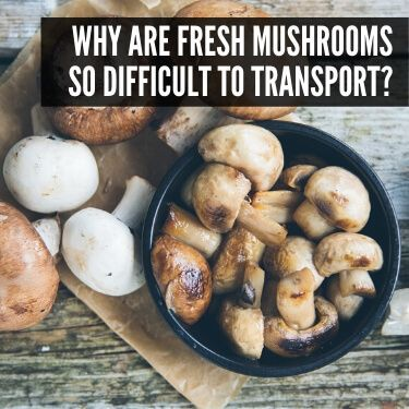Why are Fresh Mushrooms so Difficult to Transport