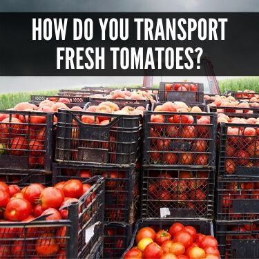 How Do You Transport Fresh Tomatoes