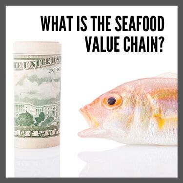 What Is the Seafood Value Chain