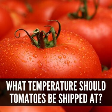 What Temperature Should Tomatoes be Shipped At