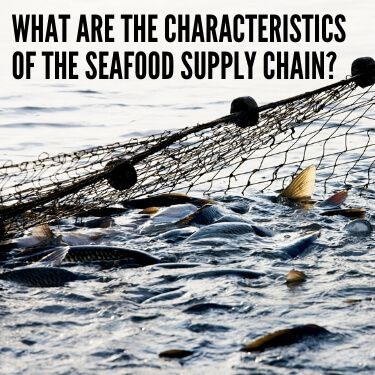 What are the Characteristics of the Seafood Supply Chain