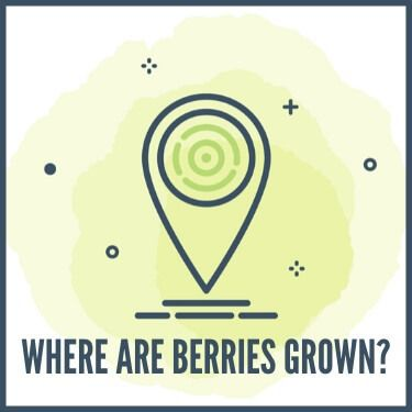 Where are Berries Grown