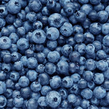 Freight Shipping from Michigan to New York Blueberries