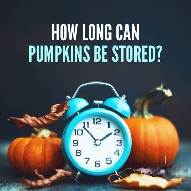 How Long Can Pumpkins Be Stored