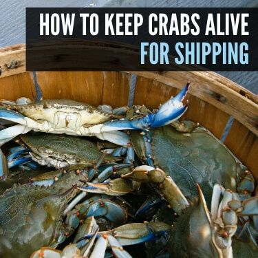 How to Keep Crabs Alive for Shipping