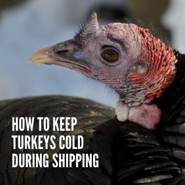 How to Keep Turkeys Cold During Shipping