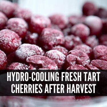 Hydro-cooling Fresh Tart Cherries after Harvest
