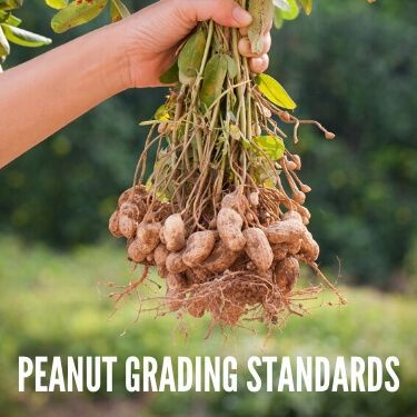 Peanut Grading Standards