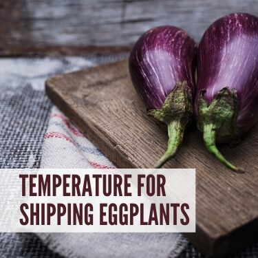 Temperature for Shipping Eggplants