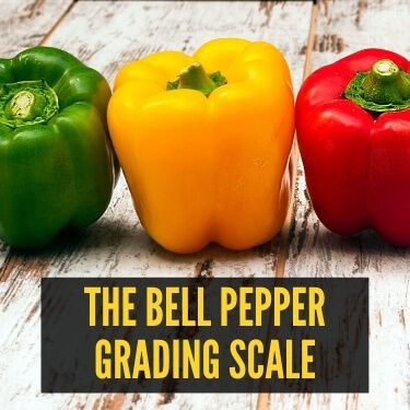 The Bell Pepper Grading Scale