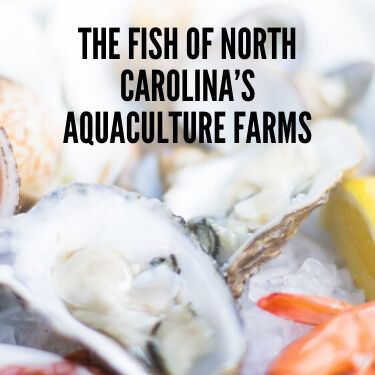 The Fish of North Carolina's Aquaculture Farms