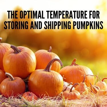 The Optimal Temperature for Storing and Shipping Pumpkins