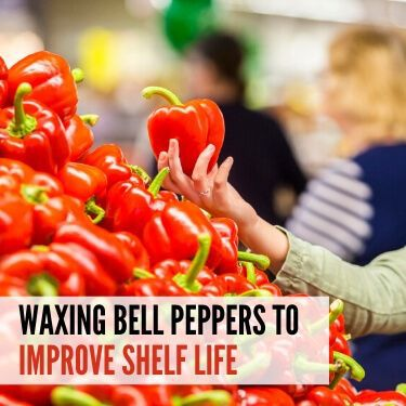 Waxing Bell Peppers to Improve Shelf Life