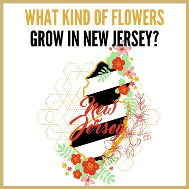 What Kind of Flowers Grow in New Jersey