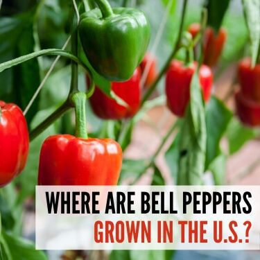 Where are Bell Peppers Grown in the U.S.