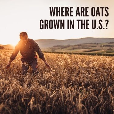 Where are Oats Grown in the U.S.