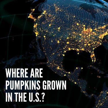 Where are Pumpkins Grown in the U.S.