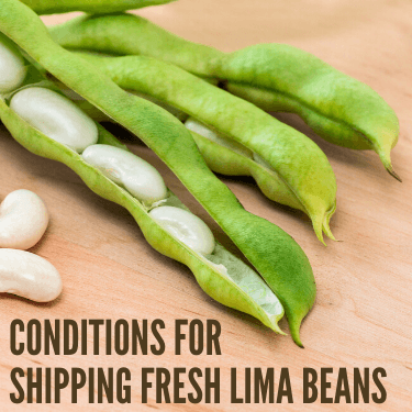Conditions for Shipping Fresh Lima Beans