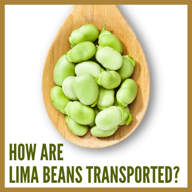 How are Lima Beans Transported