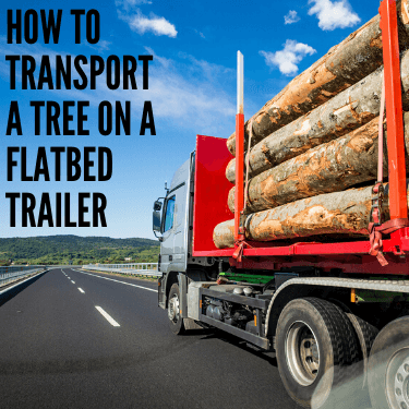 How to Transport a Tree on a Flatbed Trailer