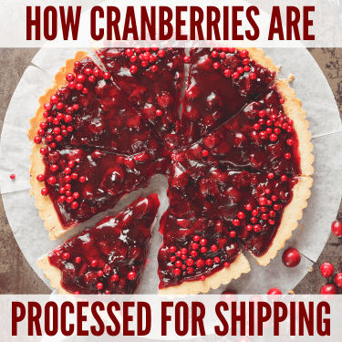 How Cranberries are Processed for Shipping