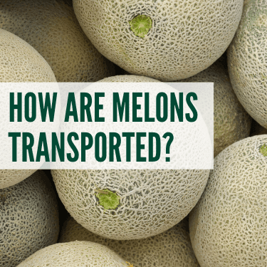How are Melons Transported