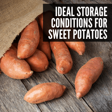 Ideal Storage Conditions for Sweet Potatoes