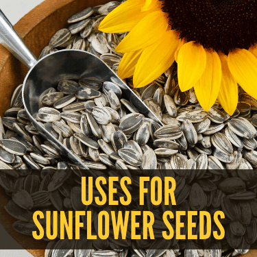 Uses for Sunflower Seeds