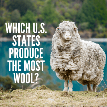 Which U.S. States Produce the Most Wool