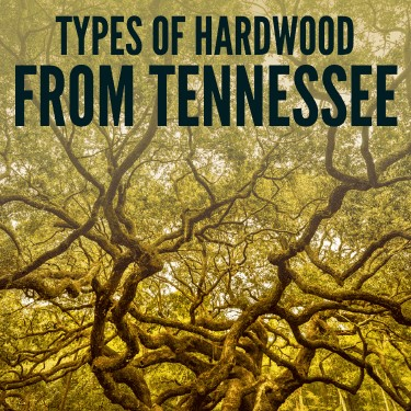 Types of Hardwood from Tennessee