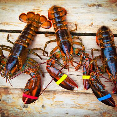 Lobster Shipping Freight from Maine to Texas