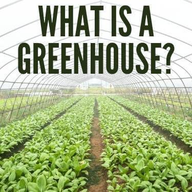 What Is A Greenhouse