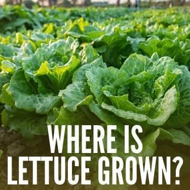 Where Is Lettuce Grown