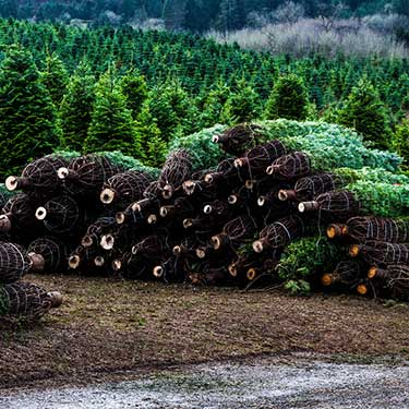 Freight Shipping from Pennsylvania to Texas Christmas Trees